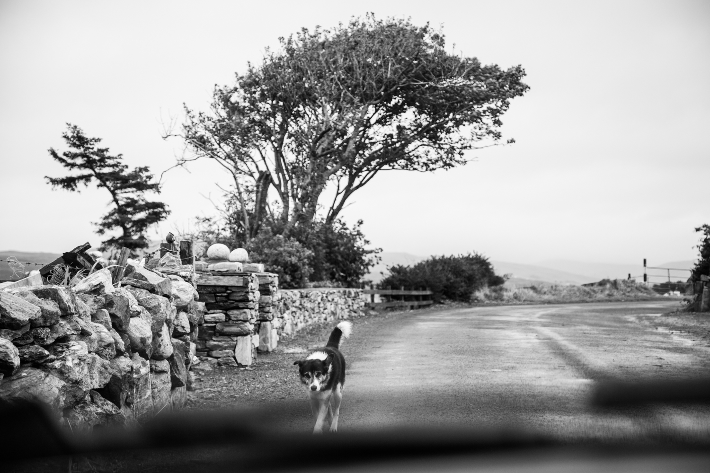 Irland_Fotograf_SusannStaedter-1-50