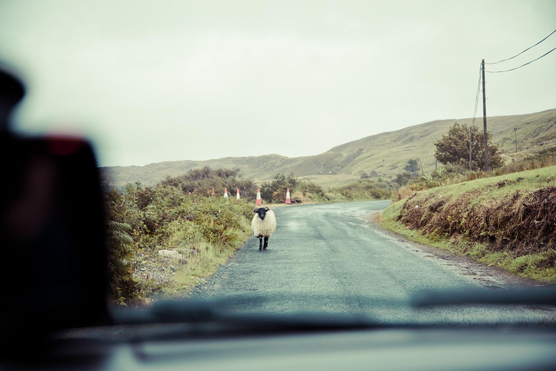 Irland_Fotograf_SusannStaedter-1-51